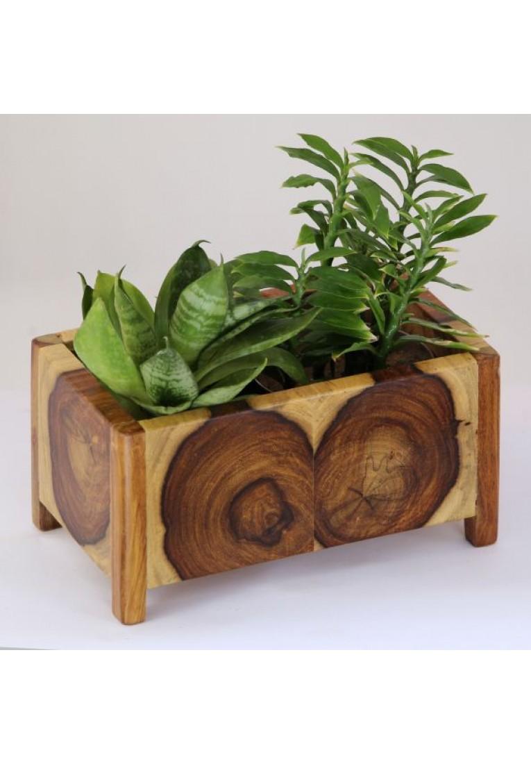 Binary Cube - End Grain  Succulent Planter