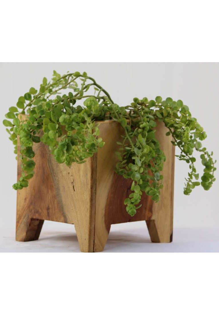 Green Bucket - Planter